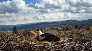 """Уеб камера от село Ярлово на живо гледате гнездо на щъркел, благодарение на """"Българско дружество за защита на птиците""""."""