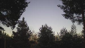 Уеб камера от Родопите - с. Бойково 1100 м.н.в,