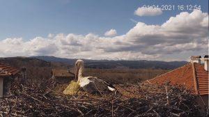 Уеб камера от с. Драгушиново. Камерата наблюдава гнездо на щъркел, а на заден фон е с панорамна гледка към Самоковското поле и Витоша в далечина.